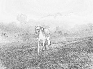 Fiona's Foal