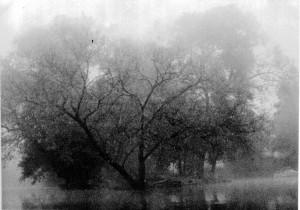 dawn on the wey-black & white