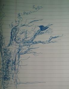 birdleaf for gill