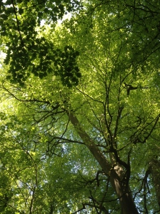 Trees in sunlight