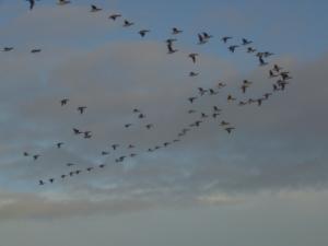angel bird flight