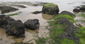 Rocks & sea 2