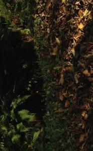 pixie Dell tree